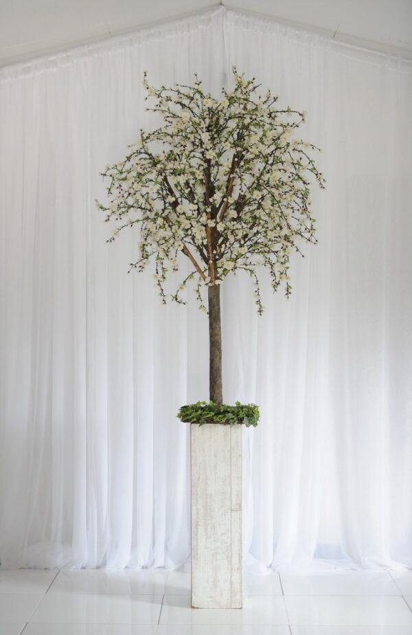 large cherry blossom tree n.ireland