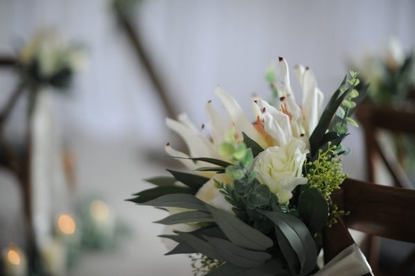white protea pewends