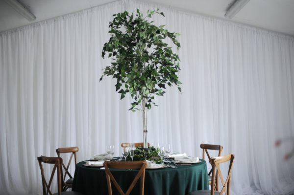 fiscus tree table centre